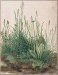 Tall Grass (Durer)