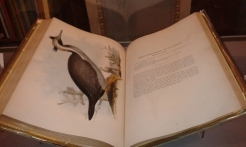 Birds of Australia (John Gould)